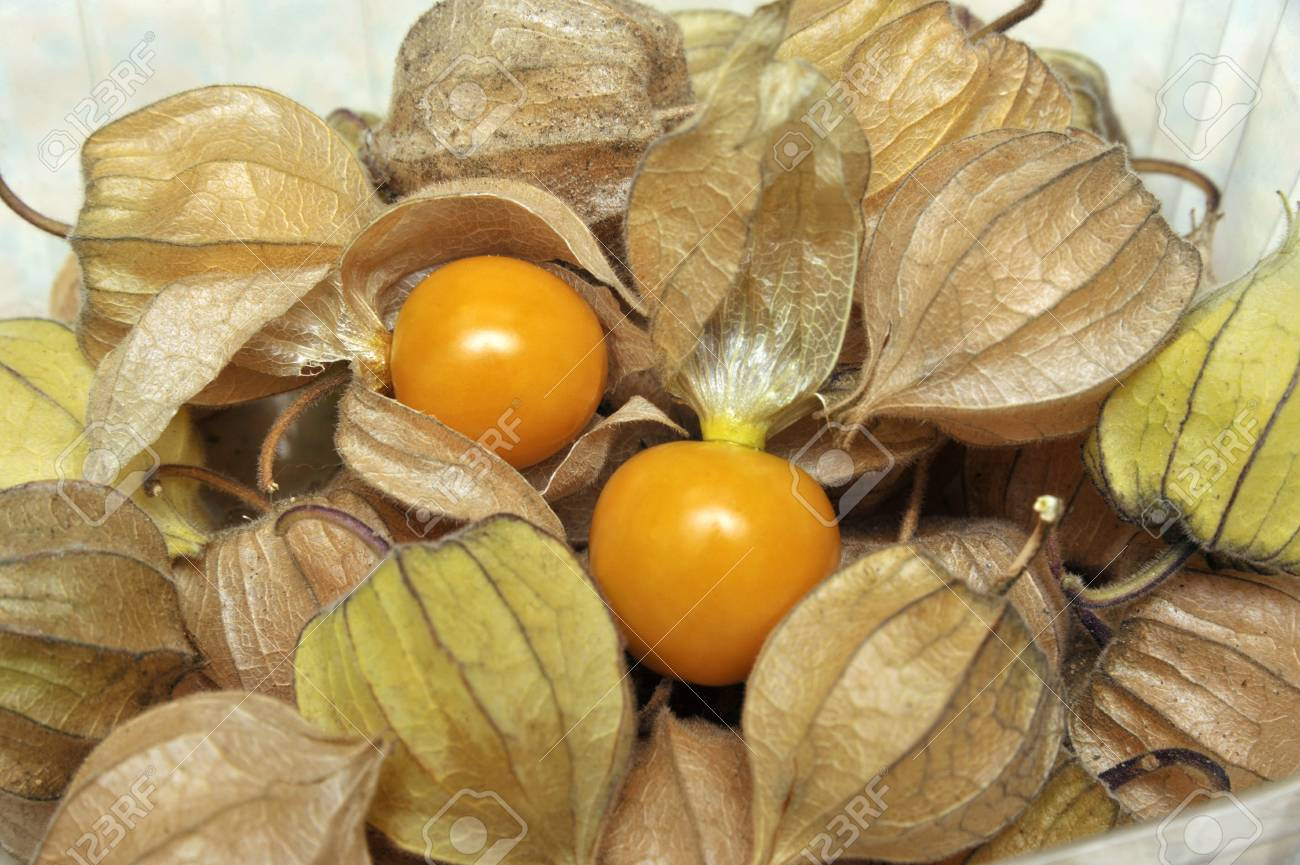 Things-You-Probably-Didnt-Know-About-Physalis